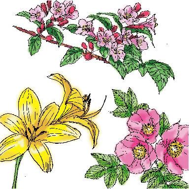 積丹の植物